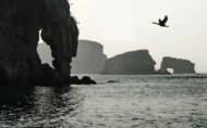 飞向海王岛